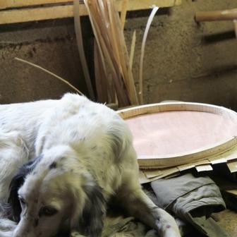 fabrication de fauteuils en châtaignier, le chien dans l'atelier