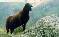 Couverture en pure laine vierge, la Noire du Velay