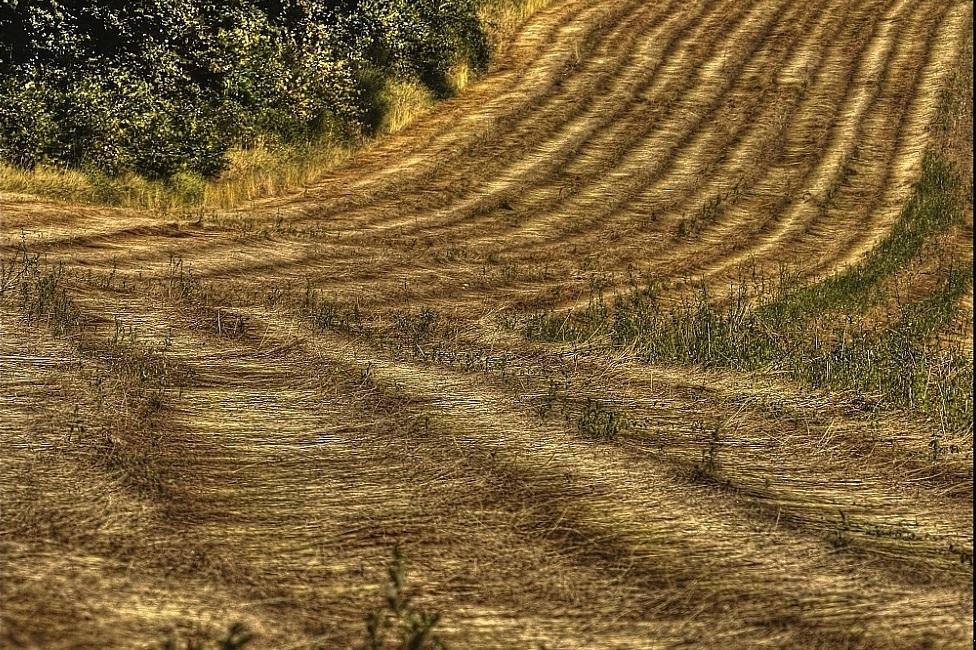 Landmade et le lien : le rouissage